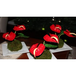 Anthurium Flowers- set of 2